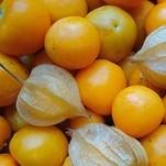 Andenbeere Schönbrunner Gold fertige Frucht