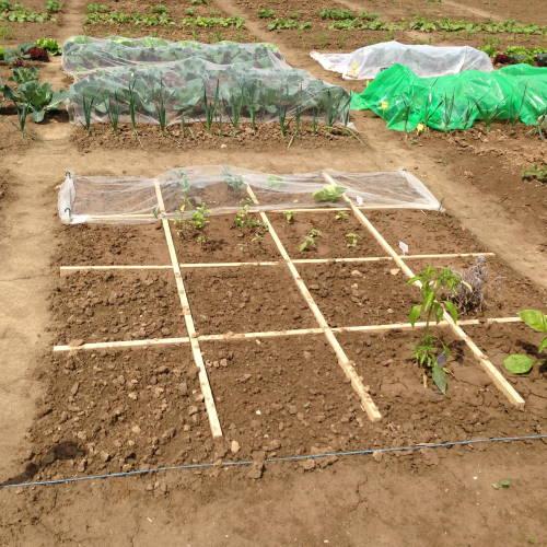 Gartenaufgaben im Februar