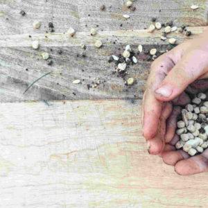 Bio-Saatgut & Pflanzen