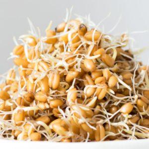 Weizen Sprossen online kaufen