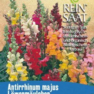 """Blume """"Löwenmäulchen"""""""