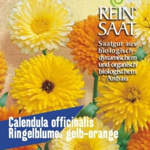 Blume Ringelblume gelb/orange (Calendula officinalis)