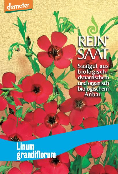Blume Roter Lein