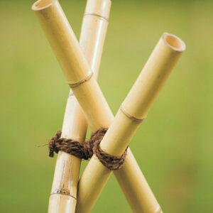 Baumanbinder Kokos