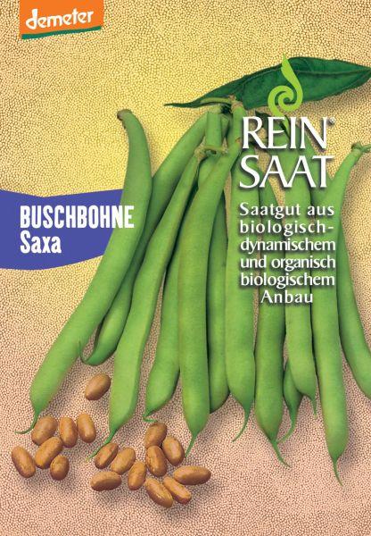 Bohne Buschbohne Saxa