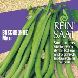 Buschbohne Maxi