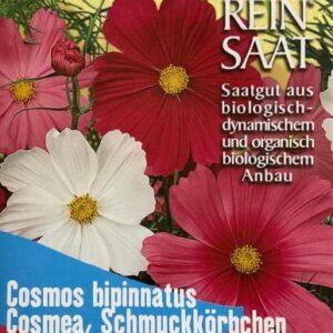 "Blume ""Cosmos, Schmuckkörbchen"""