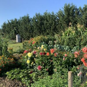 Dauergarten mieten in Köln