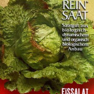 Salat - Eissalat Grazer Krauthäuptel