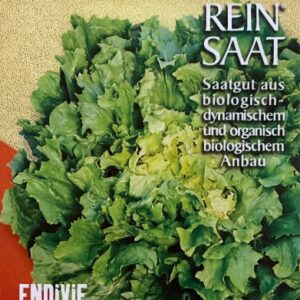 Endiviensalat Escariol grüner