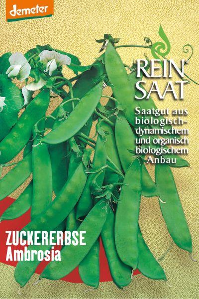 """Zuckerschote (Zuckererbse) """"Ambrosia"""""""