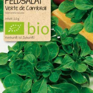 Feldsalat Verte de Camprai