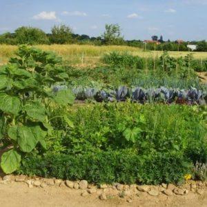 Gemüsegarten mieten in Frankfurt
