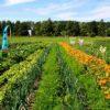 Garten mieten Aachen