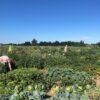 Gemüsegarten mieten in Berlin Rudow