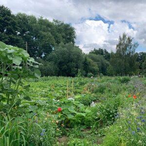 Gemüsegarten mieten in Bielefeld