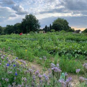 Gemüsegarten mieten in Bochum