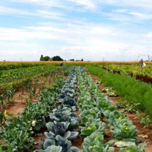 Gemüsegarten mieten in Bornheim