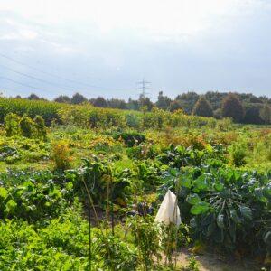 Gemüsegarten mieten in Bottrop