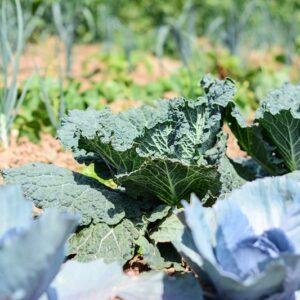 Gemüsegarten mieten in Duisburg
