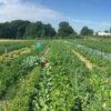 Gemüsegarten mieten in Solingen / Wuppertal