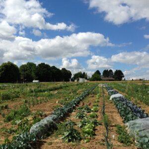 Gemüsegarten mieten in Wiesbaden