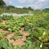 Gemüsegarten mieten in Bonn
