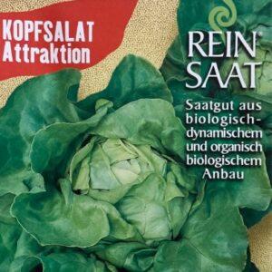 Kopfsalat Attraktion