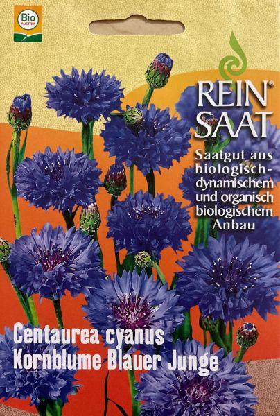 """Blume """"Kornblume Blauer Junge"""""""