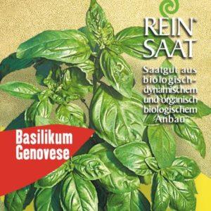 Basilikum Genovese