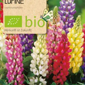 Blume Lupine