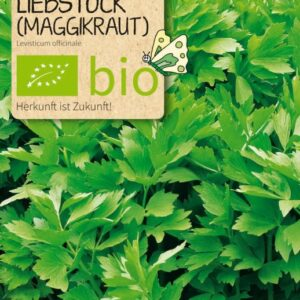 Liebstock Maggikraut