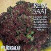 """Salat / Pflücksalat """"Lollo Rossa"""""""