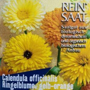 Blume Ringelblume gelb/orange (Calendula officinalis)