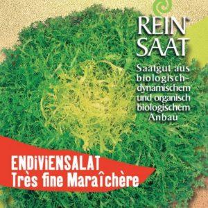 Salat - Endiviensalat Très fine Maraîchère