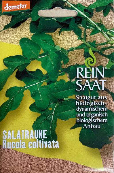 Rucola coltivata (Salatrauke)