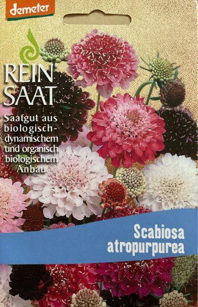 """Blume """"Witwenblume"""" (Scabiosa)"""