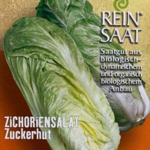 Salat - Radicchio Zuckerhut