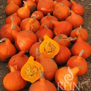 Kürbis Hokkaido orange