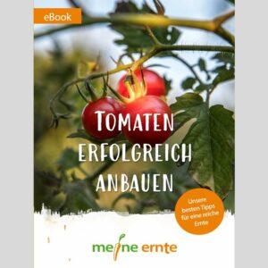 Tomaten erfolgreich anbauen – Ebook von meine ernte