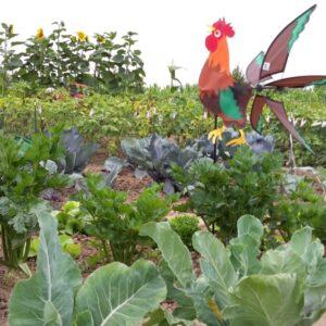 Gemüsegarten mieten in Köln