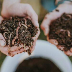 Startpopulation Kompostwürmer